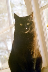 Gato negro / Black cat / El gato de la ¿Suerte?