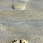 El sesgo de los grandes pasos